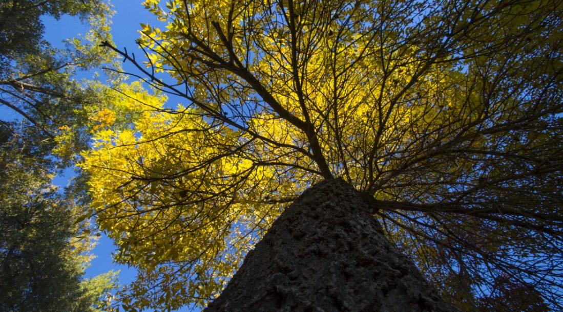 tree-from-below